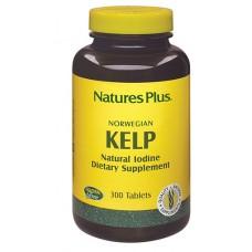 Alghe Kelp 300tav